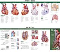 Anatomical Chart Company's Illustrated Pocket Anatomy: Anatomy of The Heart   Study Guide 2nd edition, Study Guide