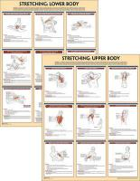 Stretching Anatomy Poster Series