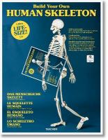 Build Your Own Human Skeleton - Life Size!